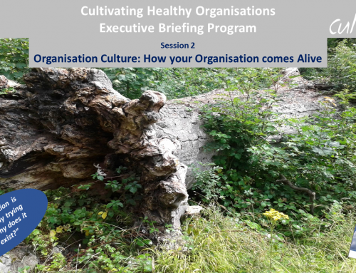 Organisation Culture – Cultivating Healthy Organisations